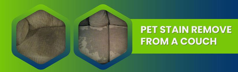 Pet Stain Remove From a Couch